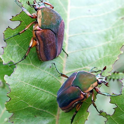 June is 'June Bug' month