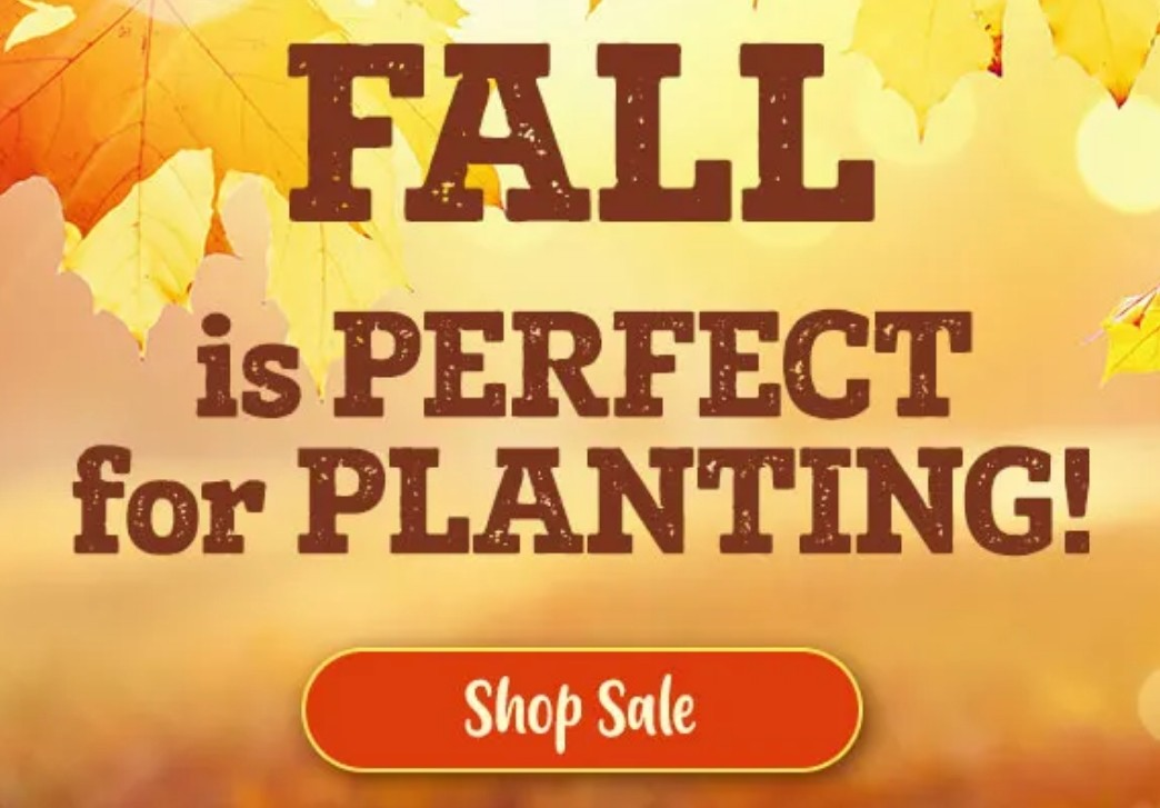 Fall-is-the-Best-Time-for-Planting-Sale