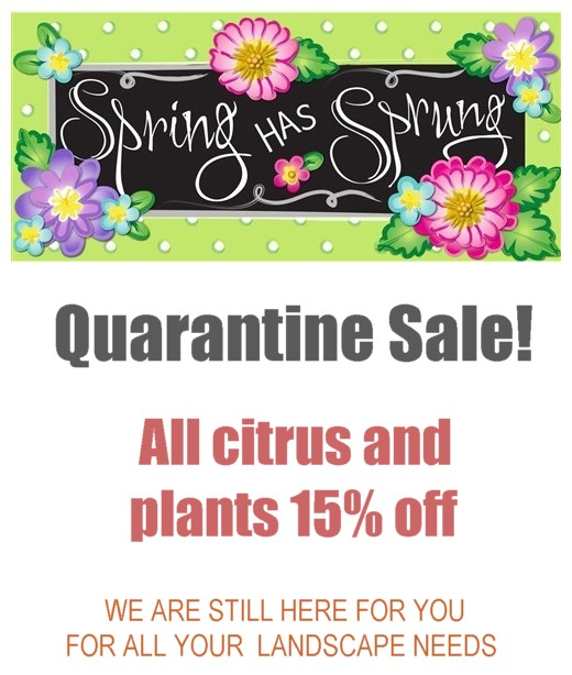 Quarantine sale