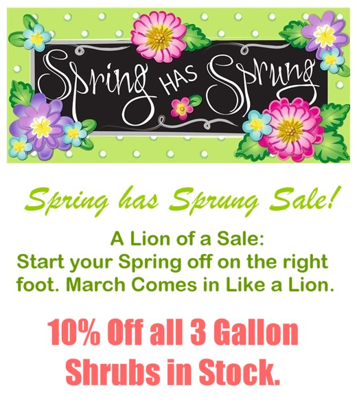 Spring has sprang sale