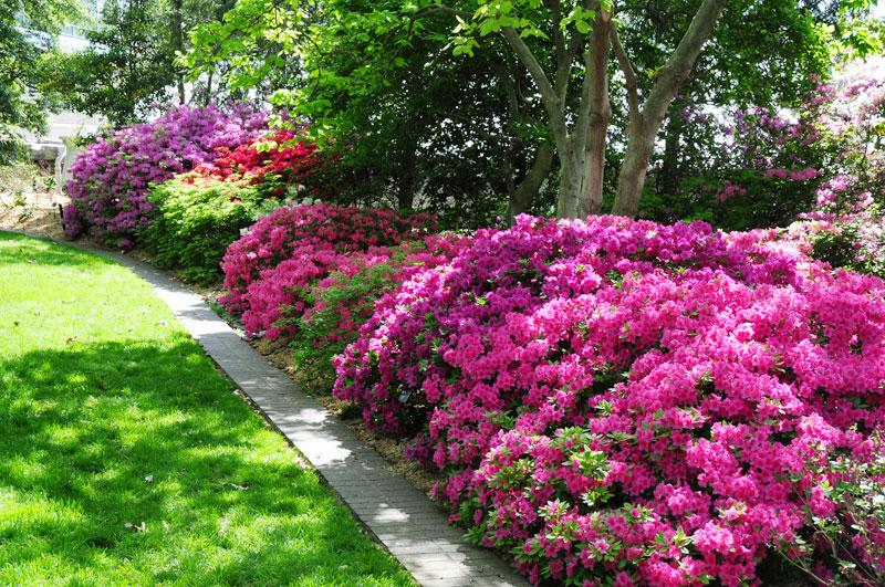 Low Maintenance Ideas for a Beautiful Landscape