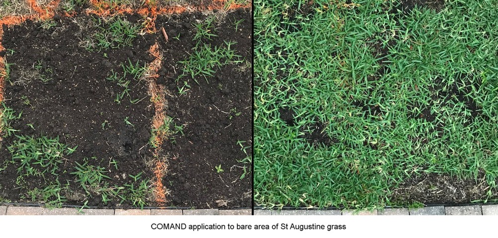 COMAND application to bare area of St Augustine grass