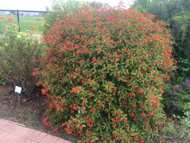 Types Of Flower Bushes